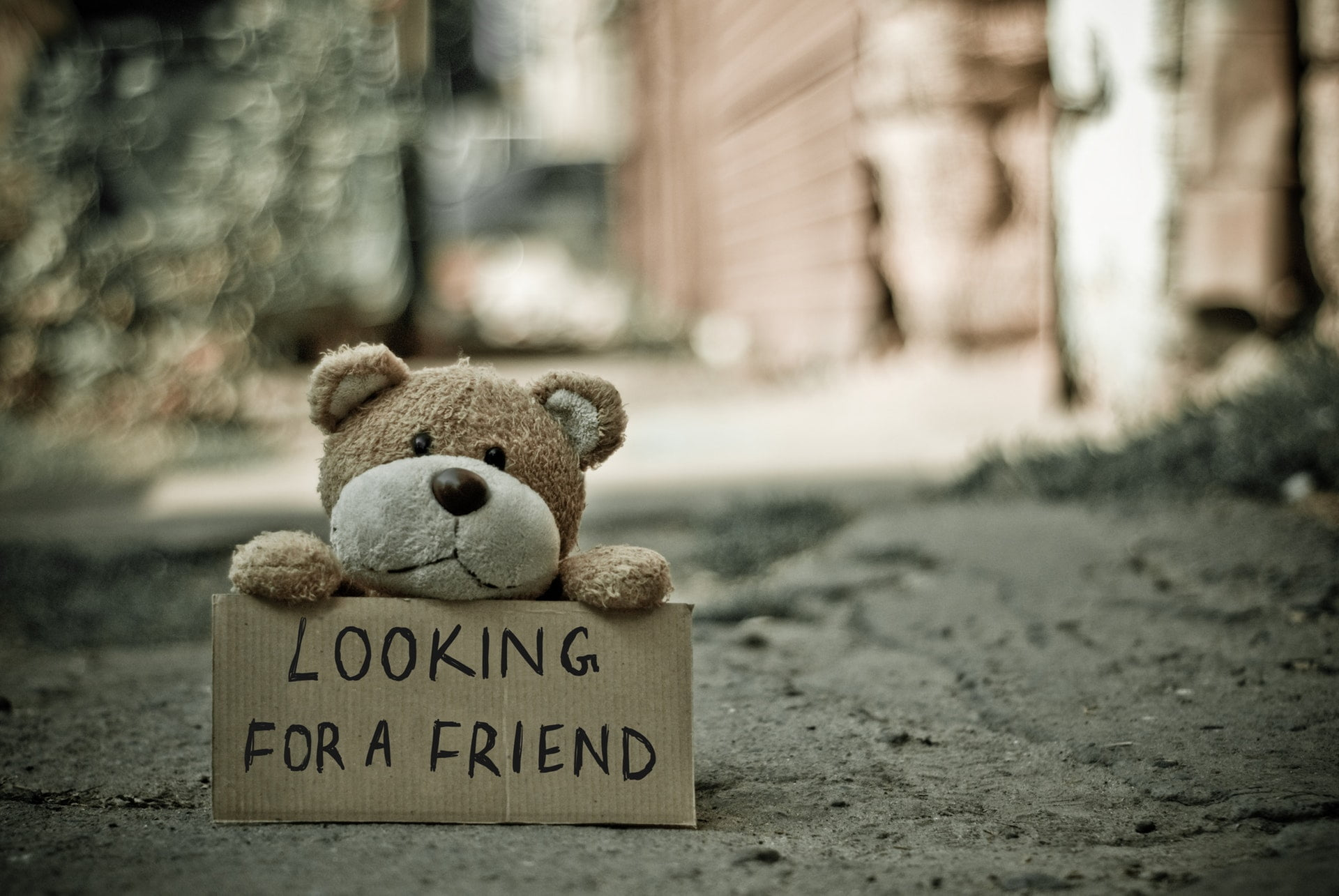 looking for a friend bear single lonely