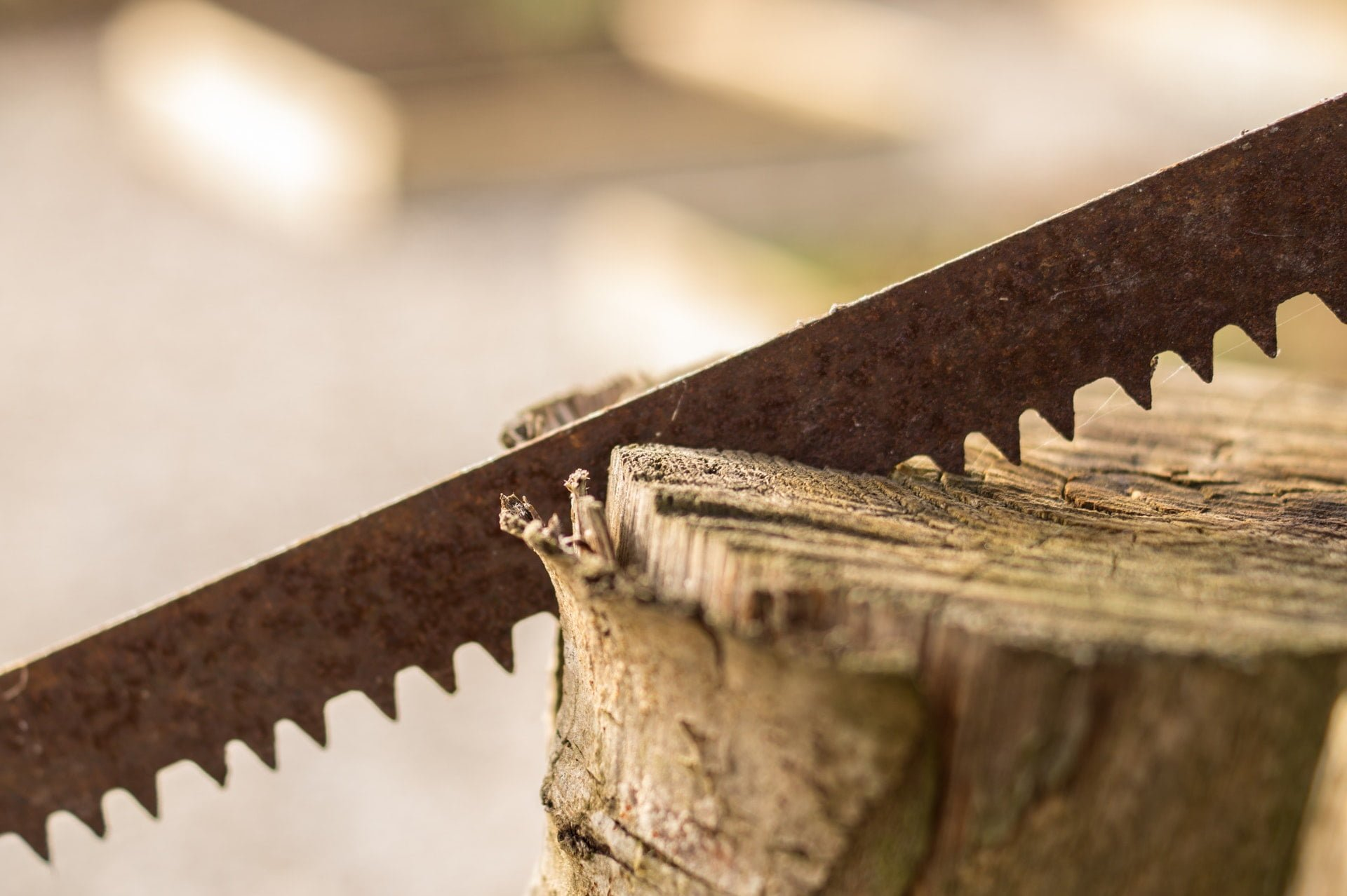 wood working garden tool saw 1 世界伐木大賽有哪六種競技項目?