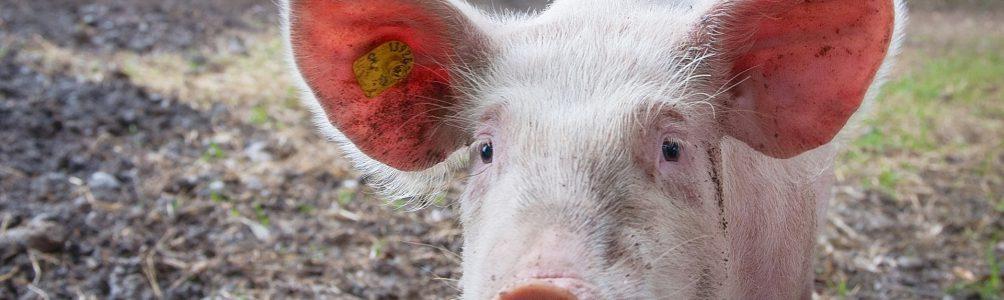 入境防疫!動物、植物產品管制簡單分類法