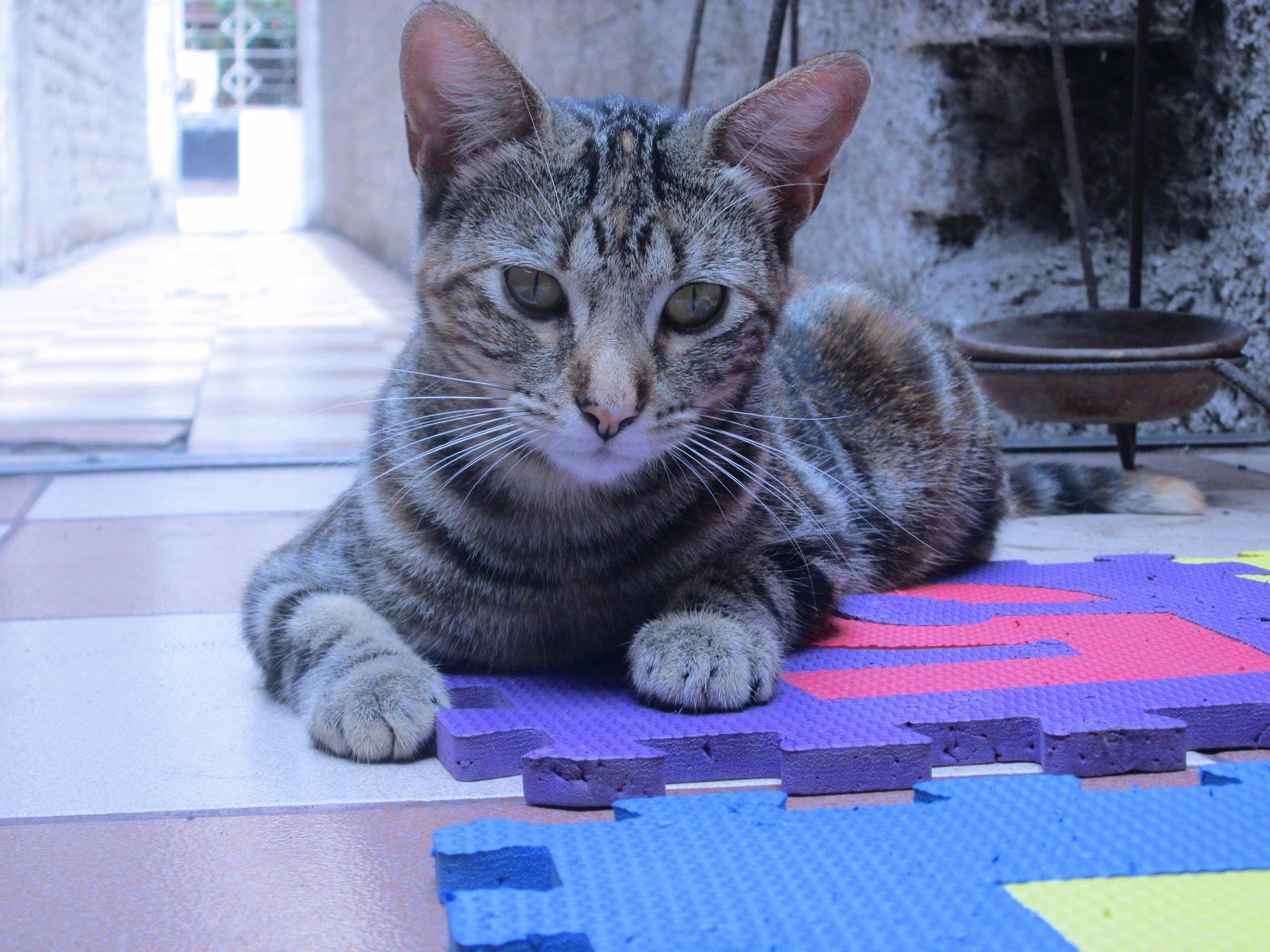 animal cat plastic mats in Room 塑膠地墊可以資源回收清運嗎?