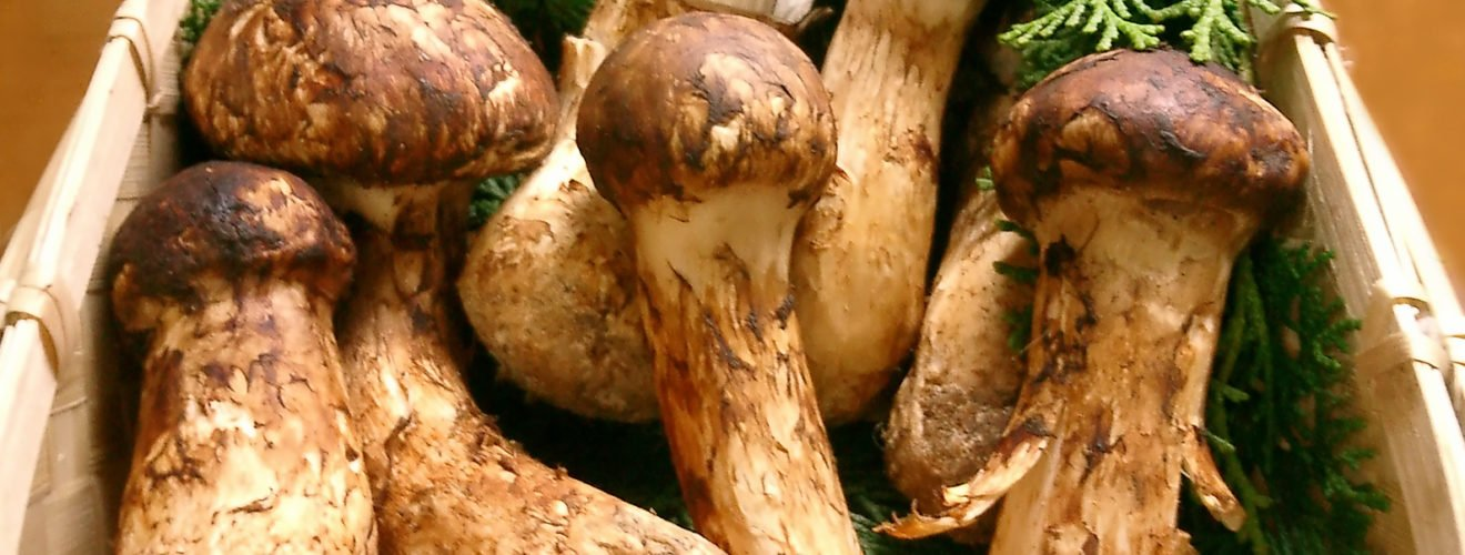 Matsutake Food Japan Korea China When should matsutake be roasted and eaten before it is the most delicious?